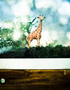 Spielzeug-Giraffe in Vitrine mit Moos,