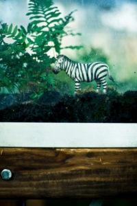 Spielzeug-Zebra in Vitrine mit Moos,