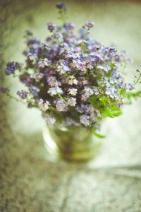 Vergissmeinnicht in Vase,