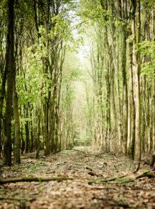 Waldweg im Frühling,