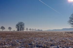 Trees in winter scenery