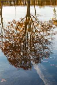 Tree reflections on the water surface