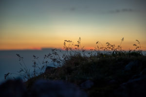 Bergwiese bei Sonnenaufgang, Stubaier Alpen, Tirol, Österreich