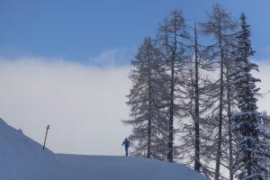 Tourengeher beim Aufstieg. Lärchenbäume. Blauer Himmel. Wolken.