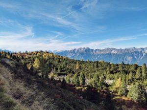 Unterwegs auf dem Tiroler Zirbenweg, Blick auf das Karwendelmassiv, im Vordergrund ein Zirbenwald
