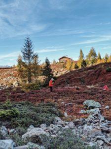 Unterwegs auf dem Tiroler Zirbenweg: Beerensammler in den Heideböden