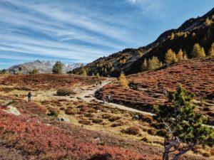 Unterwegs auf dem Tiroler Zirbenweg, Wanderweg entlang der Heideböden