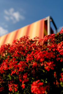Balcony flowers with awning against a blue summer sky