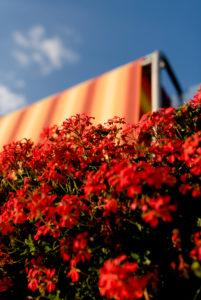 Balkonblumen mit Markise vor blauem Sommerhimmel