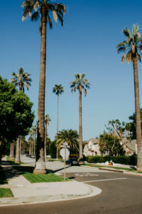 USA, California, Los Angeles, drive through Beverly Hills, typical of Los Angeles: large palm trees stand on the roadside