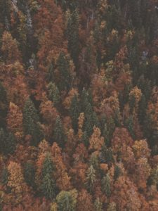 autumn coniferous forest from above