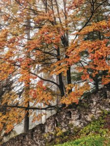 herbstlicher Baum ragt hinter eine Mauer hervor