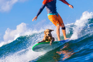 Surfer with a dog on the surfboard.