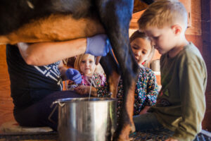 Children looking at farmer milking goat at farm