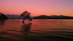 New Zealand, Lake Wanaka, tree in the water