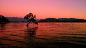 Lonely tree in the water, Wanaka in New Zealand