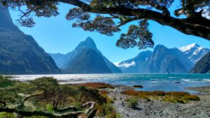 Mountain landscape behind trees and lake in Milford Sound, New Zealand