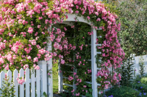 USA, New England, Maine, Cape Porpoise, flower covered gate, summer