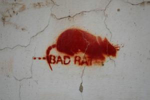 Europe, Czech Republic, Prague, wall, graffiti, stencil, bad rat