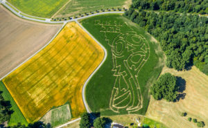 Corn labyrinth with Russian football emblem in Cappenberg, farm Lünemann, Selm, Ruhr area, North Rhine-Westphalia, Germany