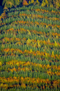 Aerial view, mixed forest on the Hennesee near Mülsborn, autumn leaves, rows of trees, Berghausen, Meschede, Sauerland, North Rhine-Westphalia, Germany