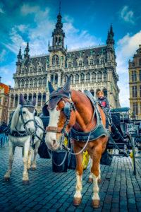 Europa, Belgien, Brüssel,Stadt, Innenstadt, Großer Platz, Stadtmuseum