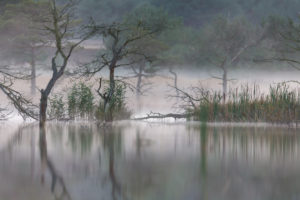 Trees and reeds are reflected in the water, morning mood