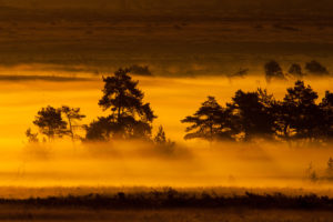 Morning mood in the Lueneburg Heath, sunrise, haze
