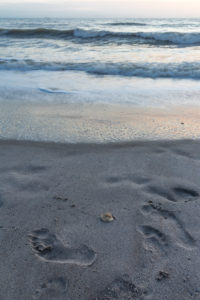 Foot tracks and seashell, sunrise, Cocoa Beach, Florida, USA, North America