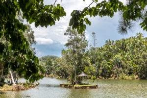 Tropical vegetation on the Ivolina River, Ivoloina National Park, Ivoloina River, Taomasina, Tamatave, Madagascar, Africa, Indian Ocean