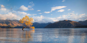 Tree in Lake Wanaka with autumn colors just after sunrise, Wanaka, Otago, New Zealand