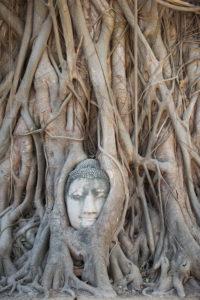 Asia, Thailand, Wat Mahathat Ayutthaya, Buddha's head, Banyan tree, ingrown,