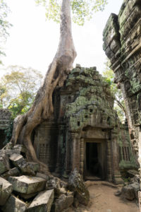Temple in Cambodia, Siem Reap