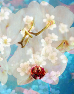 Composing with white and pink blossoms infront of blue background,