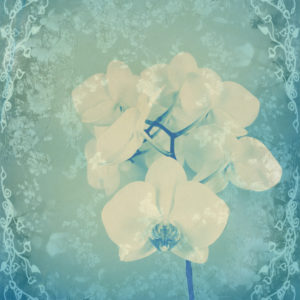Composing, white orchid framed by floral pattern,