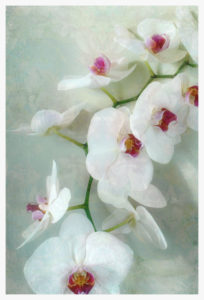 Composing of a white orchid with lucent texture,