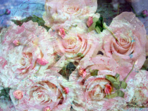 pink roses over pink rose blossoms with texture, emotional photographic layer work in painting style,