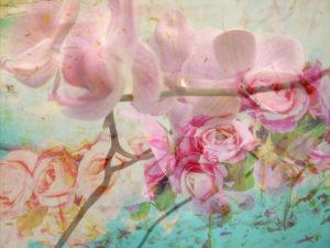 A Floral Montage,