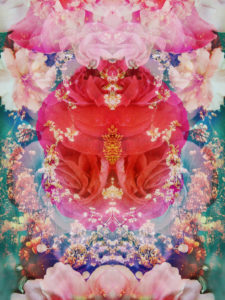symmetric floral montage from red blooming rose blossom with cherry blossoms and ornaments from spring trees