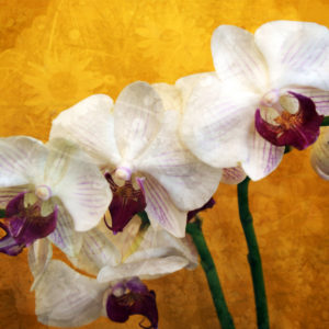 A colorful Floral Montage of white purple orchids