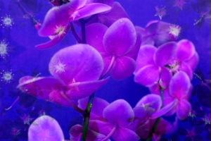 purple orchids in lavender blue moody light with shining stars from little blossoms