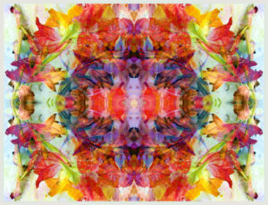 colorful symmetric layer work from gladiolus blossoms