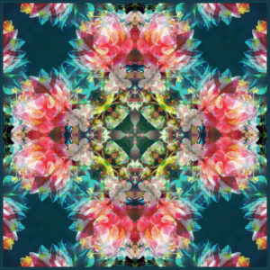 mandala ornament from dahlias, conceptual photographic layer work