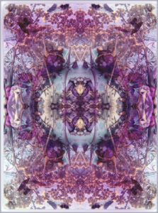 symmetric floral montage from flowers