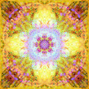 A Flower Mandala, photographic layer work from flowers