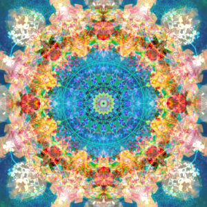 a mandala ornament from flower photographs, conceptual layer work