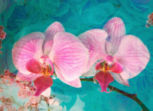 Photomontage of a pink-coloured Orchidaceae