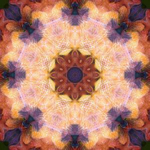 fotografisches Mandala von Orchideenblüten