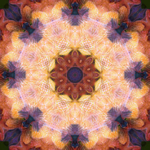 photographic Mandala of orchid blossoms