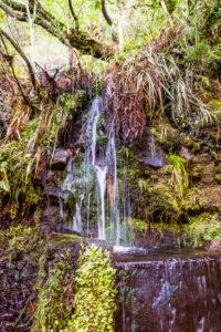 Europa, Portugal, Madeira, Hochebene Paúl da Serra, Rabacal, Levada do Risco, PR6.1, natürliche Quelle im Fels